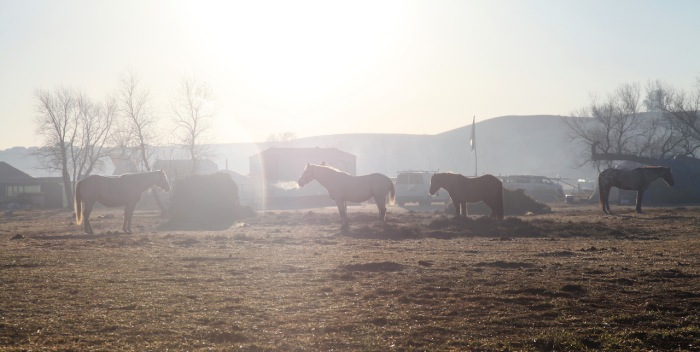HorseStandingRock11-2016_3926