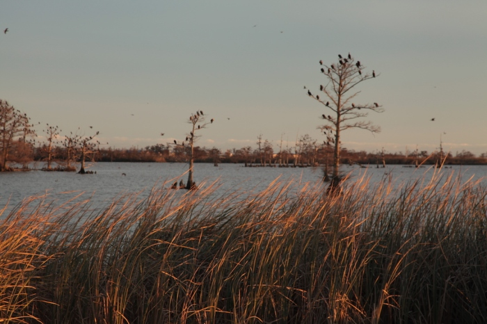 Venice 2014_8708.JPG