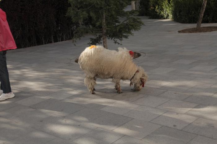 Lhasa_5895