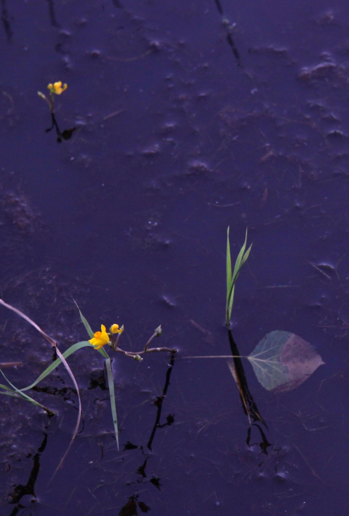 1crex meadow_0489