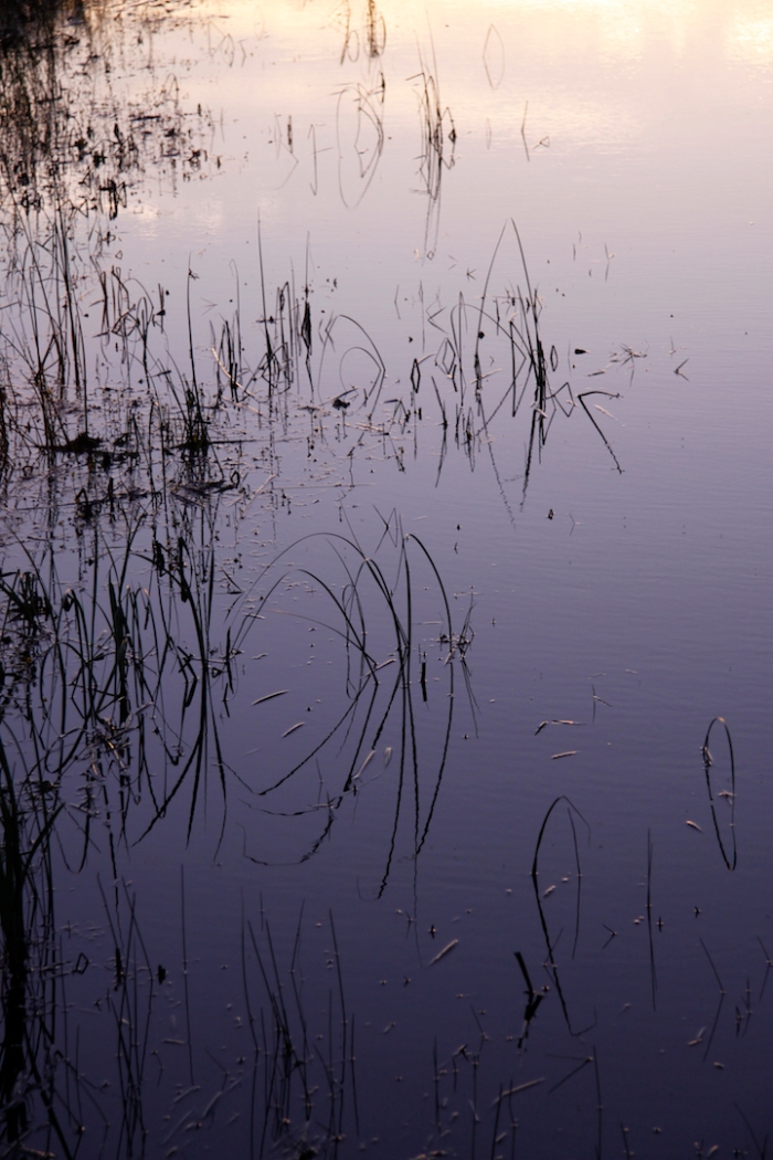 crex meadow_0451