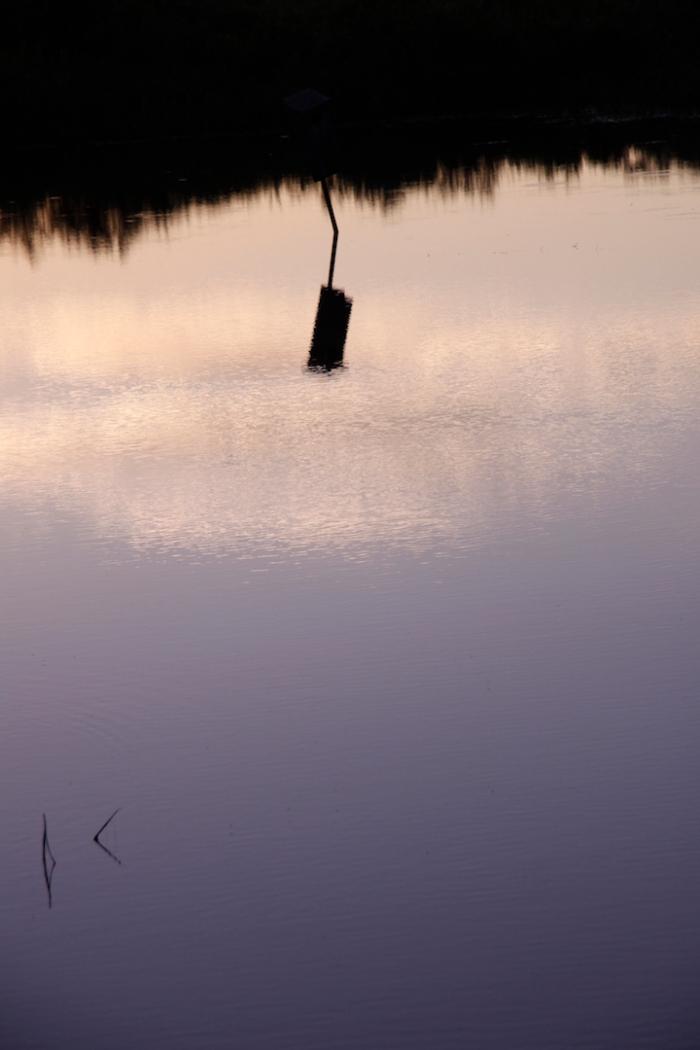 crex meadow_0454