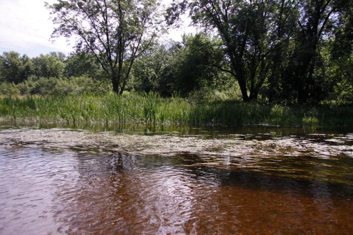 river of sturgens_0177